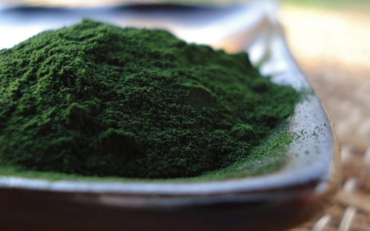 Chlorella-Powder